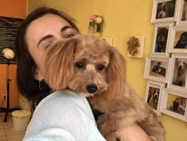 Beispiele meiner Kunden 14, Ohrenpflege, Hundesalon Schulendorf