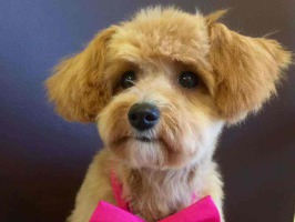Professionelle Hundepflege Hundefriseur Ziborich