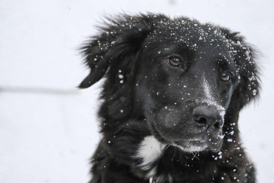 Hundefriseur Tipps - Hundehaarpflege, Fellpflege und Pfotenpflege im Winter.