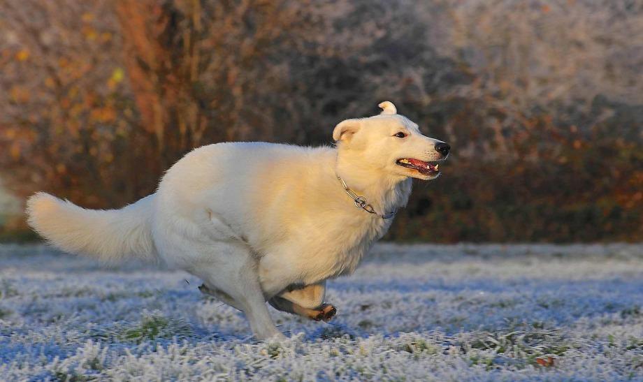 Hundefriseur Tipps - Hund in der Wohnung, Pfotenreinigung, Hundepflege im Winter
