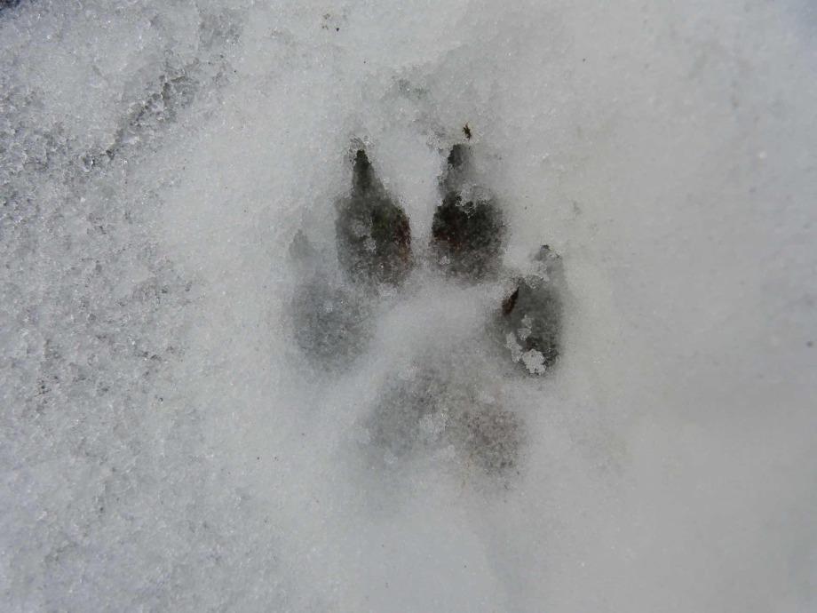 Hundefriseur Tipps - Hinweise zur allgemeinen Hundepflege sowie auch Fellpflege im Winter.
