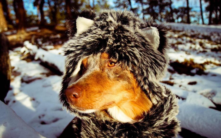 Hundefriseur Tipps - Hundemantel: Ja oder Nein?
