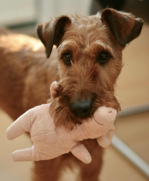 Hundesalon, Hundefriseur, Hundespielzeug, Spielzeug für Hund