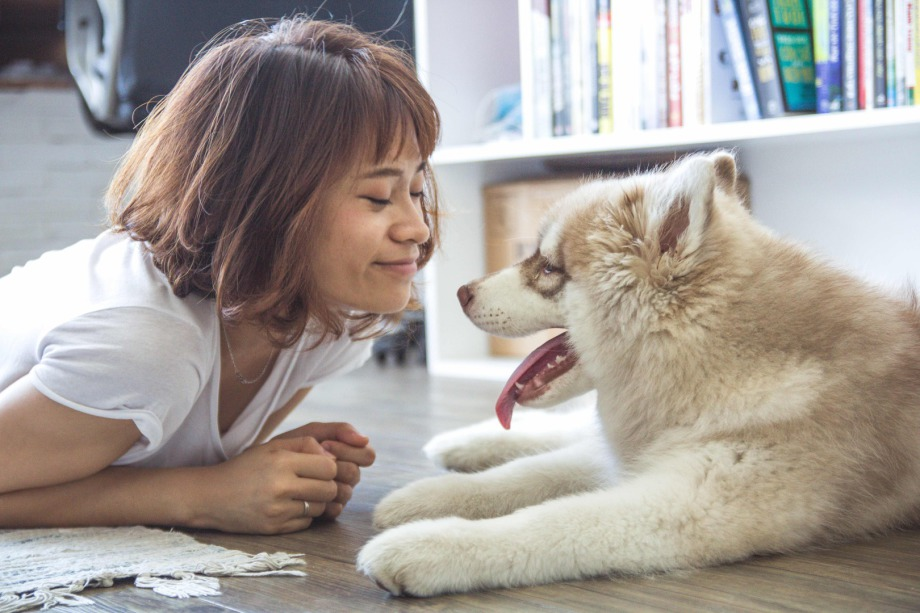 Hundesalon Ziborich, Bälle, Ringe, Stoffknochen, Plüschtiere und Spieldecken