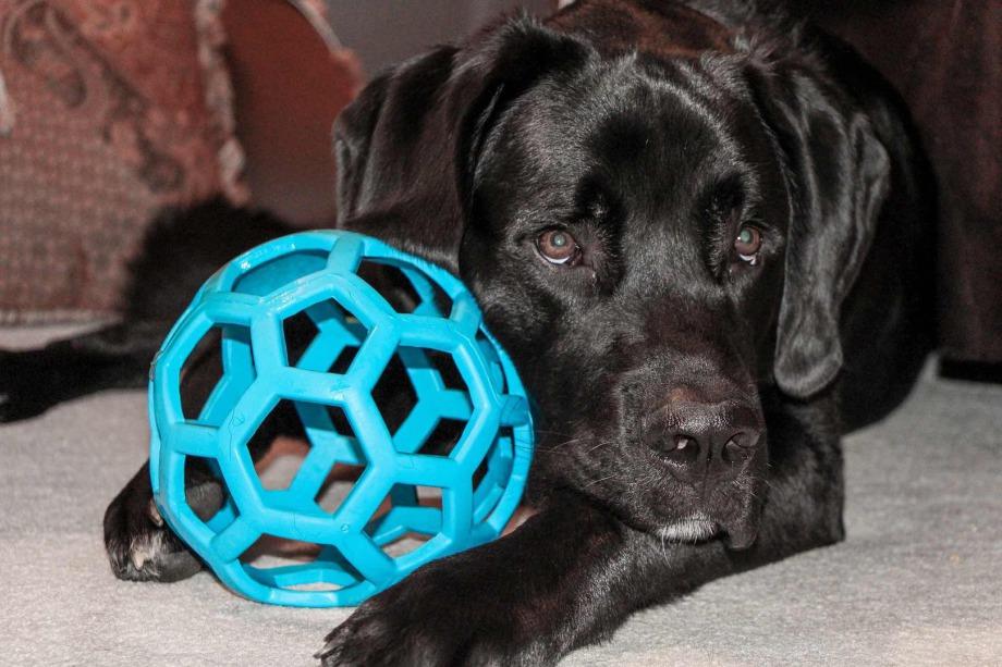 Hundefriseur Ziborich - Spielzeug, spielen mit dem Hund?