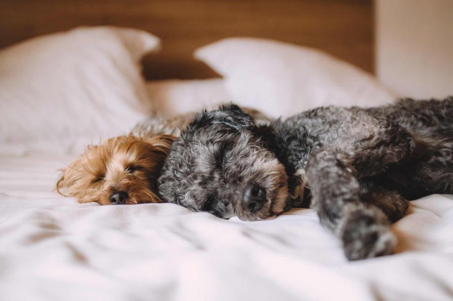 Hund im Bett – ja oder nein?
