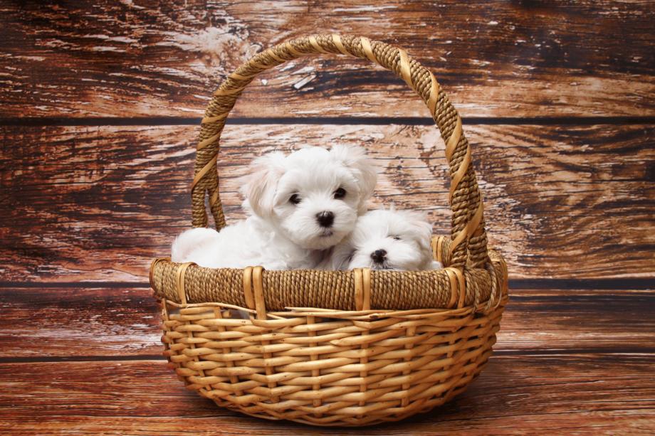 Gewöhnen Sie Ihren Hund an den Friseurbesuch