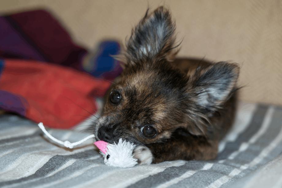 Erste Komplettpflege im Hundesalon Ziborich